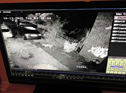 Night vision cctv fox